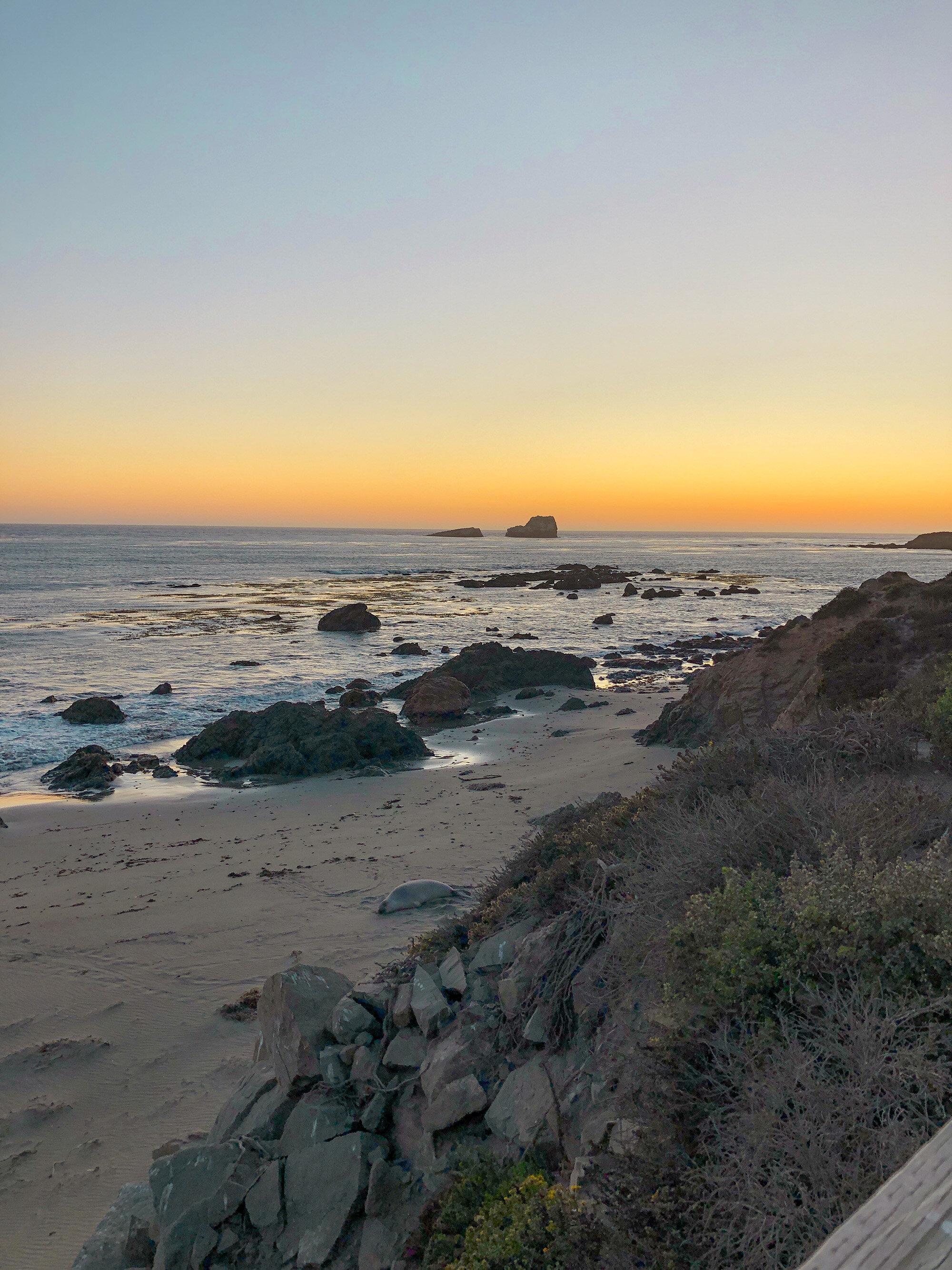 Elephant Seal Beach Carmel California