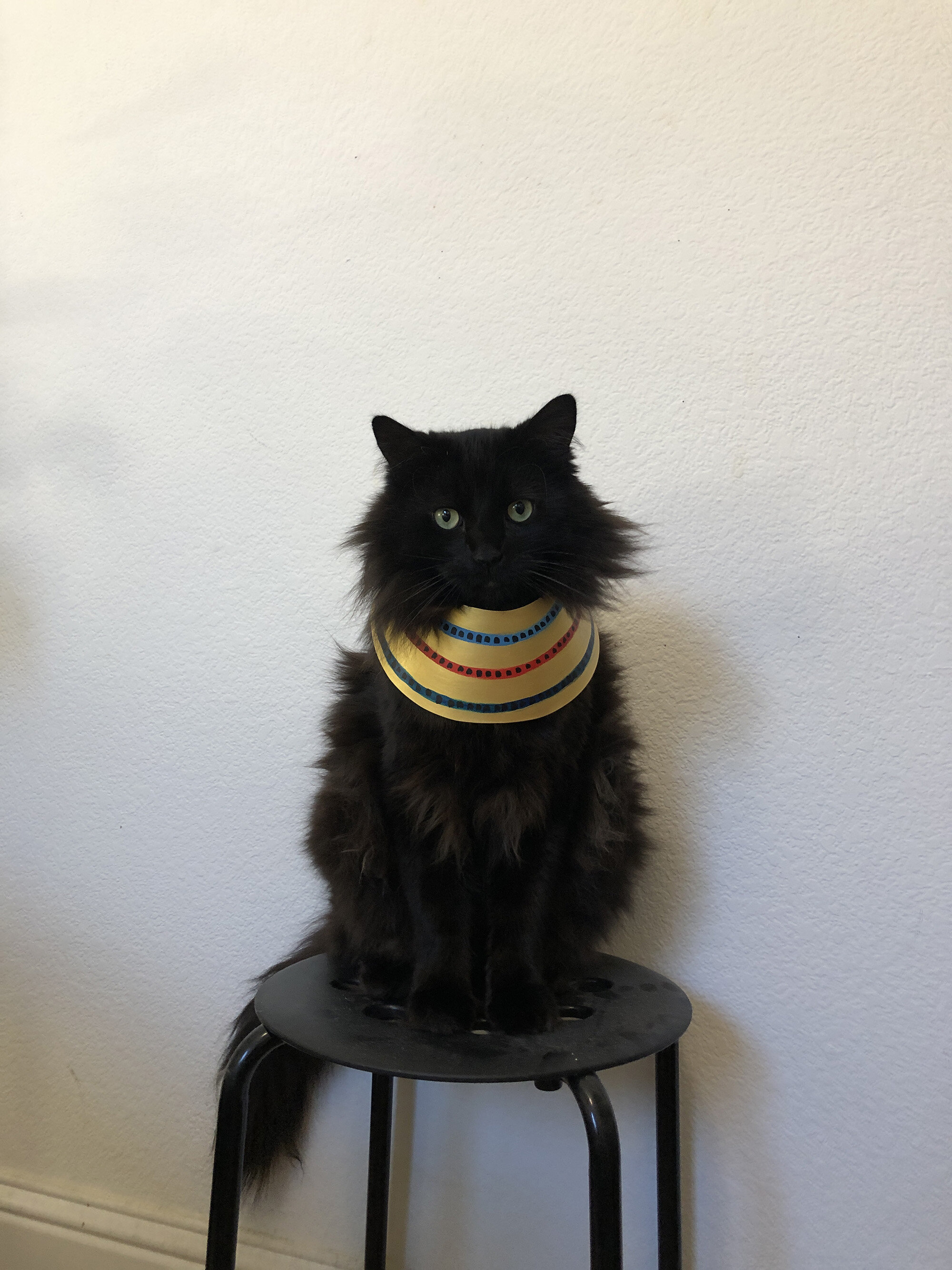 Egyptian Cat costume Sparrow