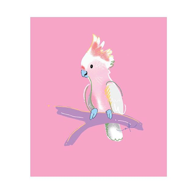 Flamin' Galah! I've got a bunch of Aussie Birds that are available as prints, cards and also wrapping paper! Link to shop on bio 😍 . . . #aussiebirds #australian #galah #flamingalah #bird #cards #giftcards #gifts #prints #digital #wrappingpaper #paper #illustration #megkolac