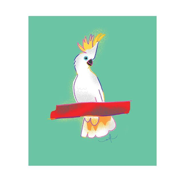 The noisiest bugger in the street! I've got a bunch of Aussie Birds that are available as prints, cards and also wrapping paper! Link to shop on bio 😍 . . . #aussiebirds #australian #sulphurcrestes #cockatoo #cockatoo #cards #giftcards #gifts #prints #digital #wrappingpaper #paper #illustration #megkolac