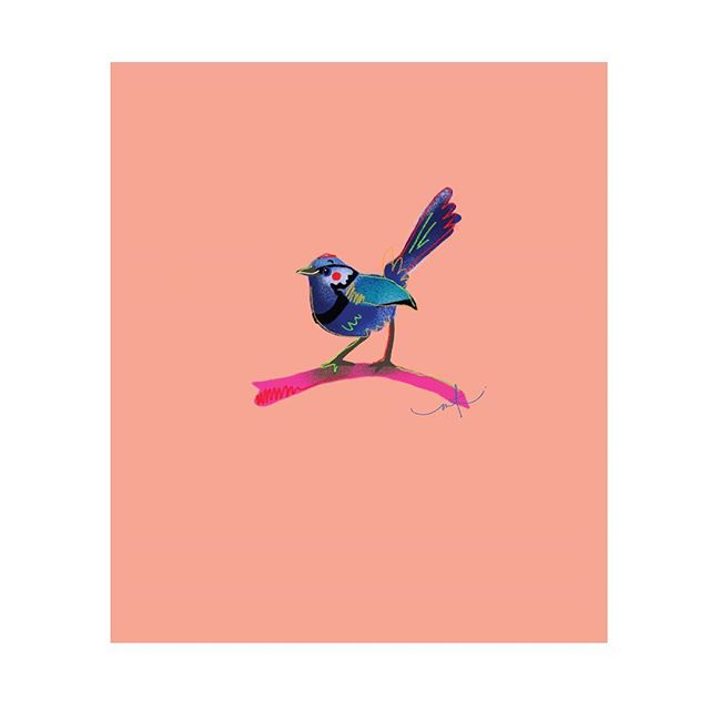 A tiny Fairy Wren! I've got a bunch of Aussie Birds that are available as prints, cards and also wrapping paper! Link to shop on bio 😍 . . . #aussiebirds #australian #fairywren #fairy #wren #cards #giftcards #gifts #prints #digital #wrappingpaper #paper #illustration #megkolac