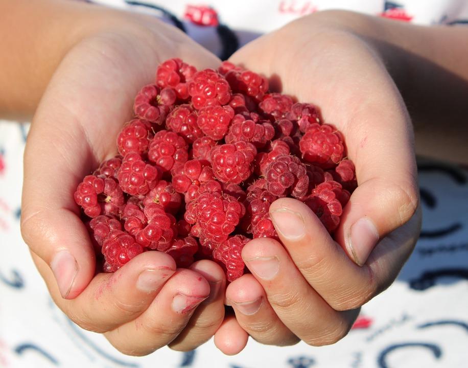 raspberry-995344_960_720.jpg