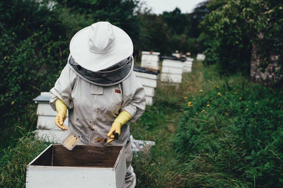 apiary-1866740_960_720.jpg