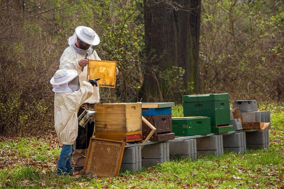 beekeeper-4426003_960_720.jpg