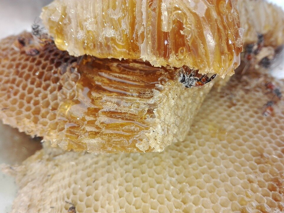 honey-1637114_960_720.jpg