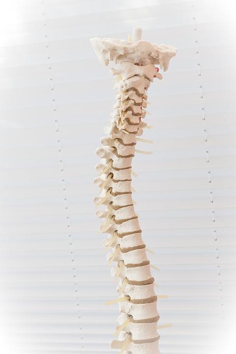 spine-2539697_960_720.jpg