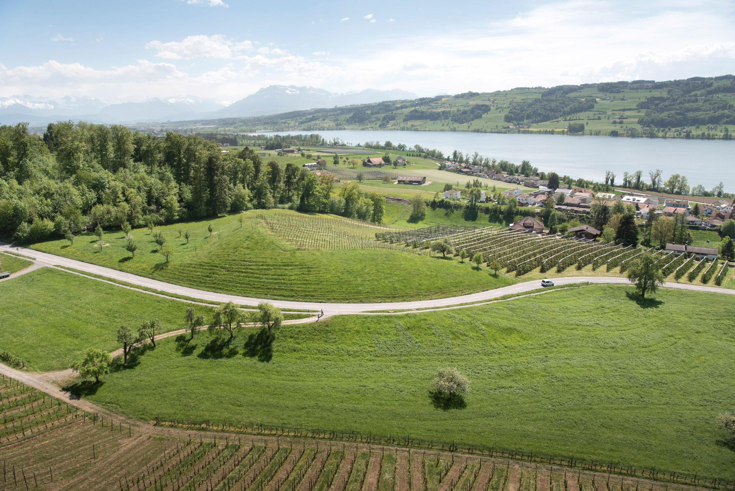 Aussicht von Schloss Heidegg / © Seetal Tourismus