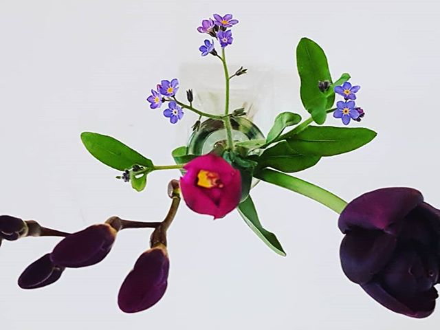 First freesia, plus forget-me-not, plus tulip.  #purple #flowersofinstagram  #springflowers