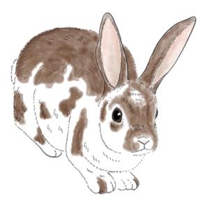 Rabbits and Bunnies!