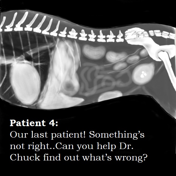 Patient 4.jpg
