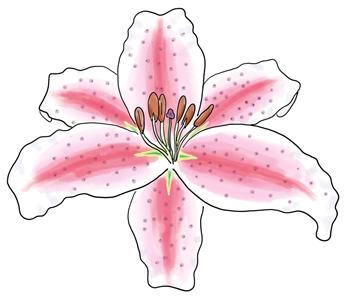 Stargazer lily ( Lilium orientalis )