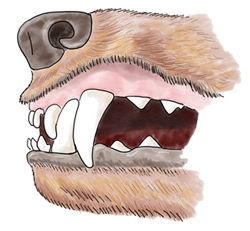 Canine Teeth.jpg