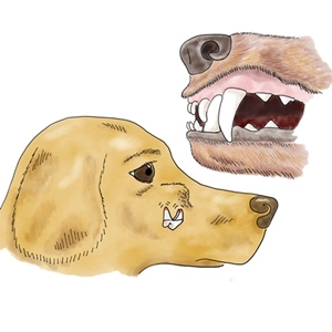 Click here to learn about the basics of dog and cat dental care at home!