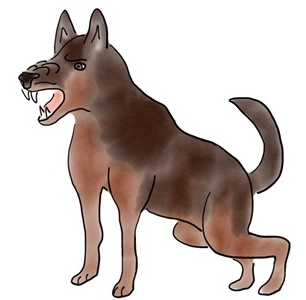 A classic Aggressive dog; the snout and brow are furrowed, the teeth are bared, the tail is up, the body position is forward, and the eyes are staring