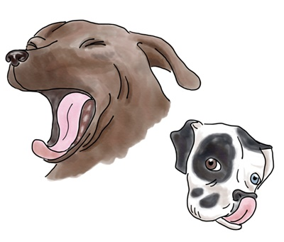 Yawning and Lip Licking are used to signal stress