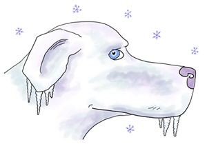A dog who suddenly freezes when you approach is nervous!