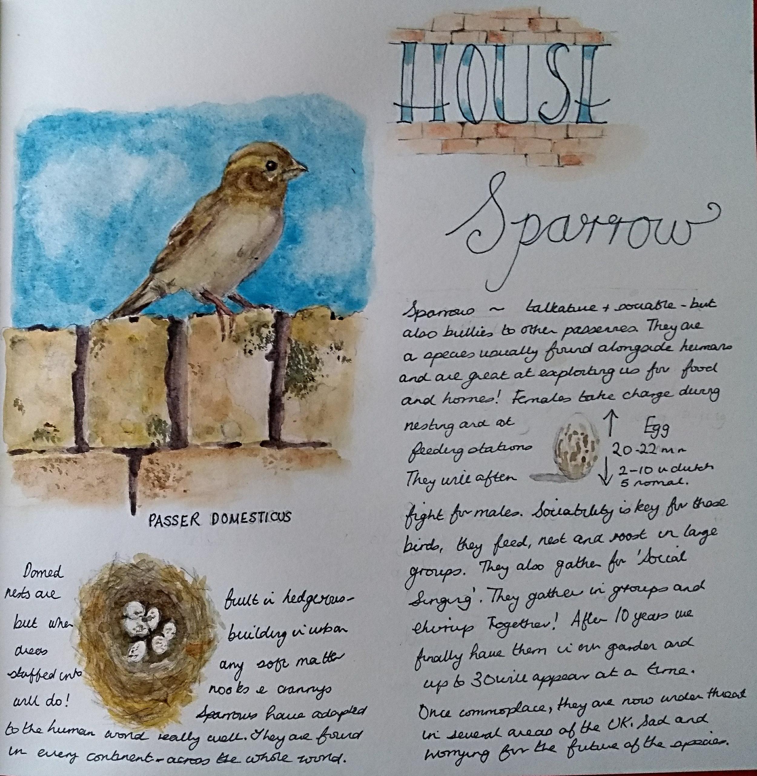 sparrow2.jpg