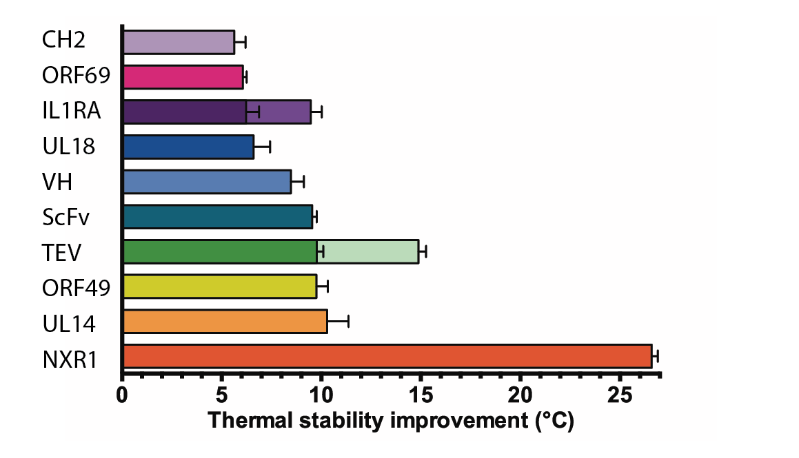 This chart shows the improvement in stability obtained for a wide range of targets. The improvement in thermal stability varies between 5°C and 26°C.