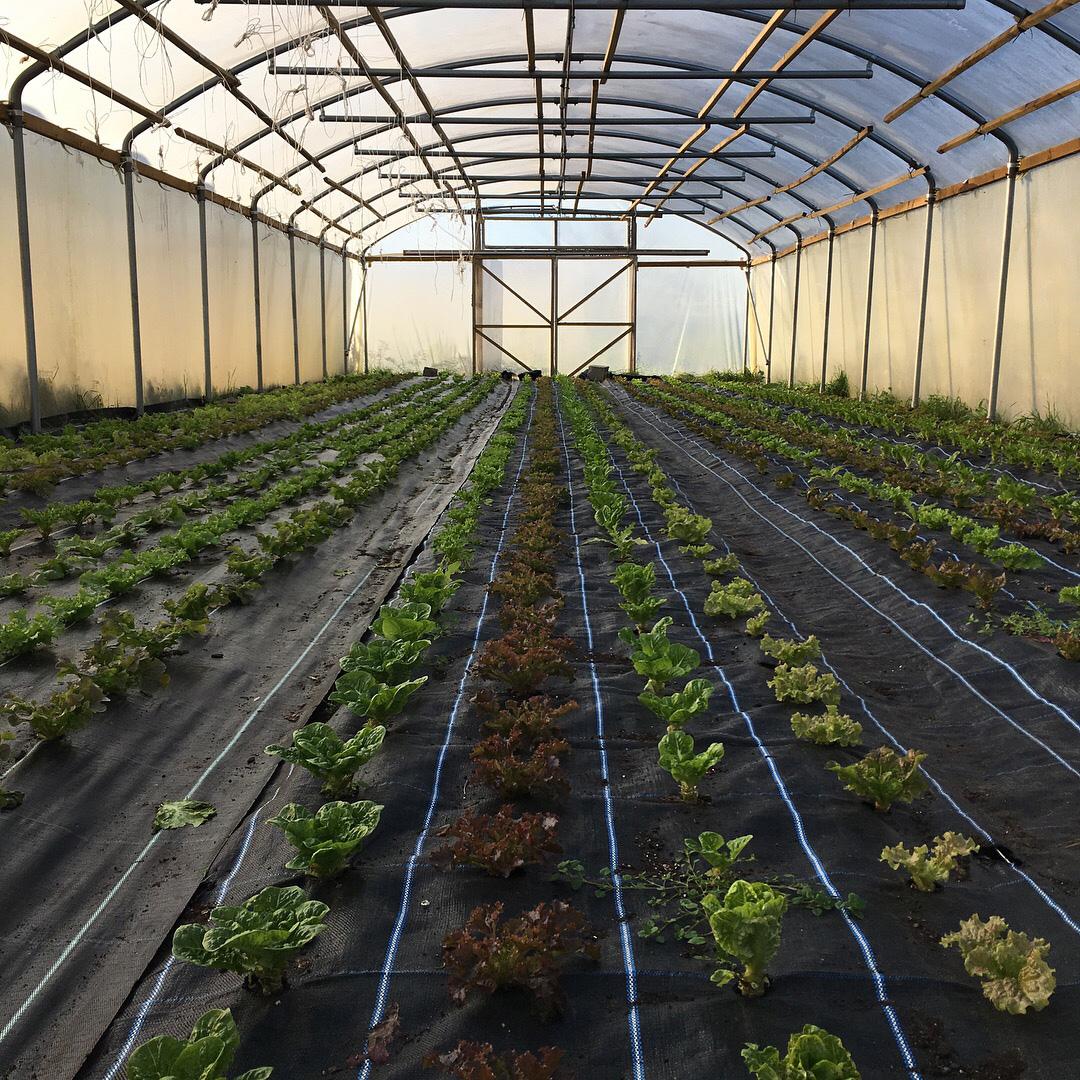 Sutton salad.jpg