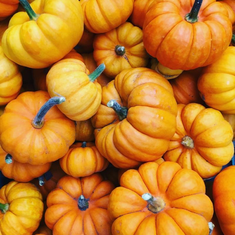 Our mini pumpkins