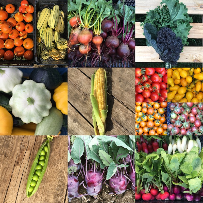 Highlights of our veg from 2018, grown by us, pesticide-free here in Farnham.