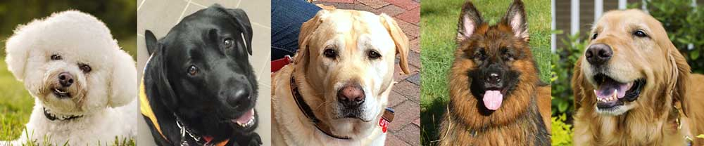 Meet Our Roxy Dogs -