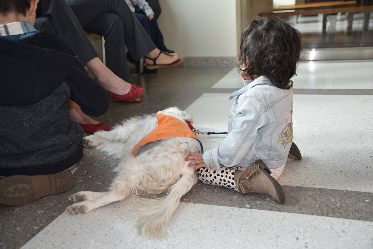 A little girl waits to appear in court with her new friend, Roxy therapy dog Emma.
