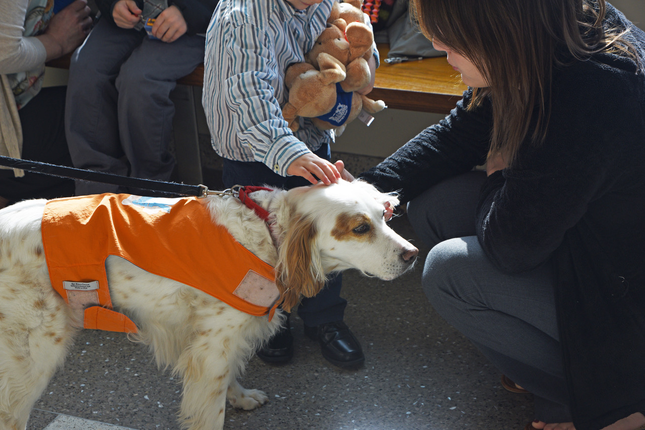 At the courthouse, a little boy pats Roxy therapy dog Emma with one hand and holds a fistful of Roxy Puppies with the other.