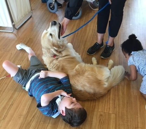 Pediatric Comfort - Picture the joy a Roxy therapy dog brings to children in hospital and healthcare settings to help relieve stress, break up their day, and speed the healing process.