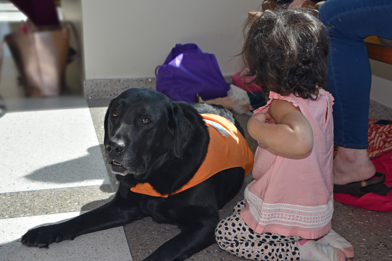 Courthouse Companionship - Imagine the fear of a child in the judicial system disappearing thanks to a loving visit from a Roxy therapy dog.
