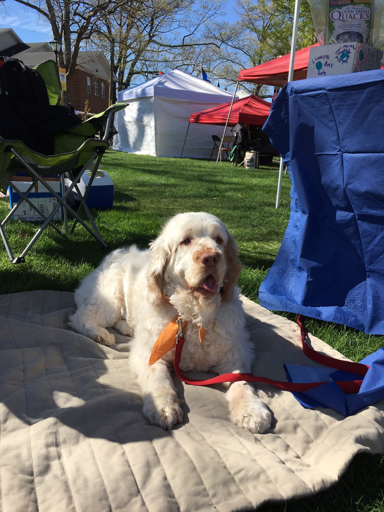 Tess at Del Val's A-Day