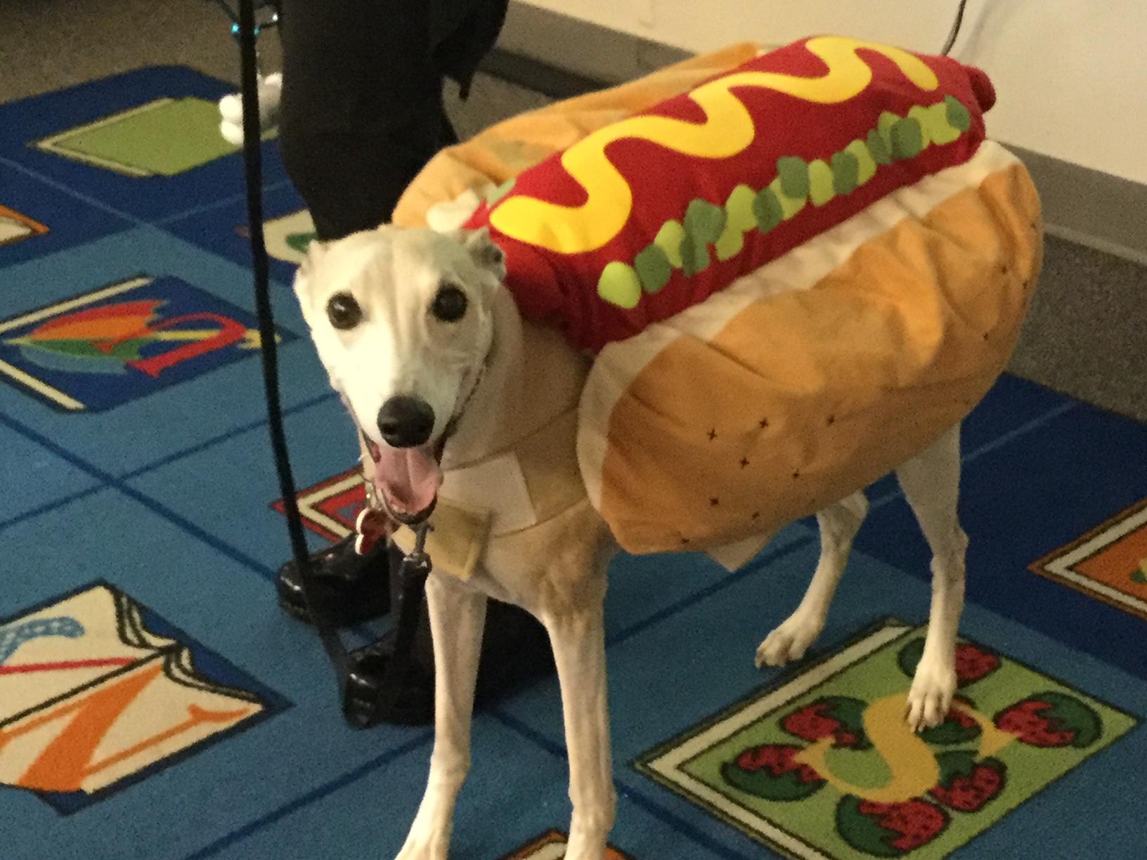 Bullet the Hot Dog