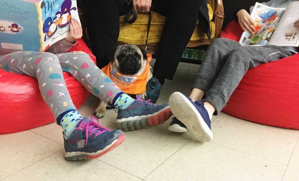 Panda the therapy dog helps this student with autism read.