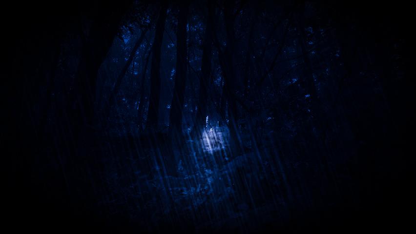 IU-denseforest-3.jpg