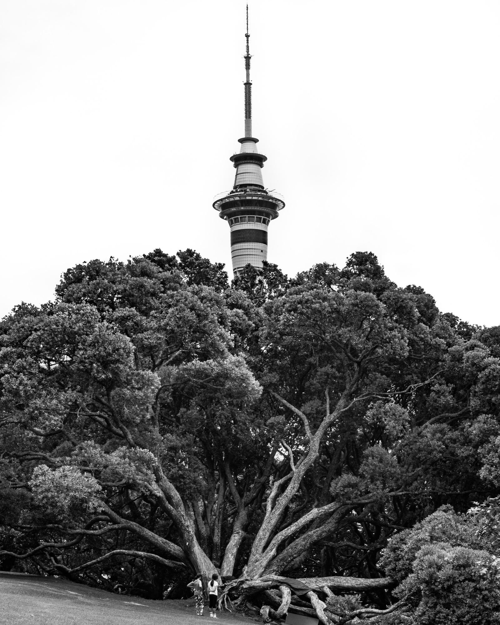 Sky Tower from Albert Park