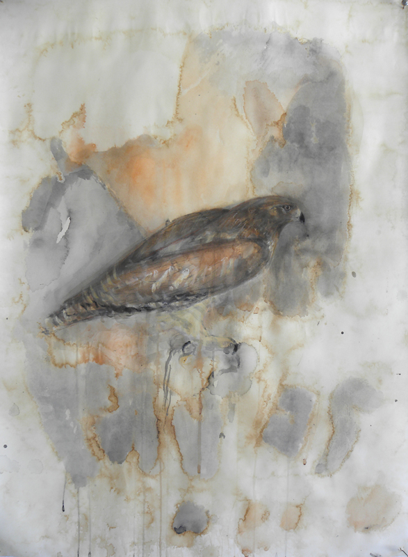 """RW Hawk,"" 2010 Korean watercolor, sumi-e ink, coffee, and beeswax on Japanese paper 30 x 22"