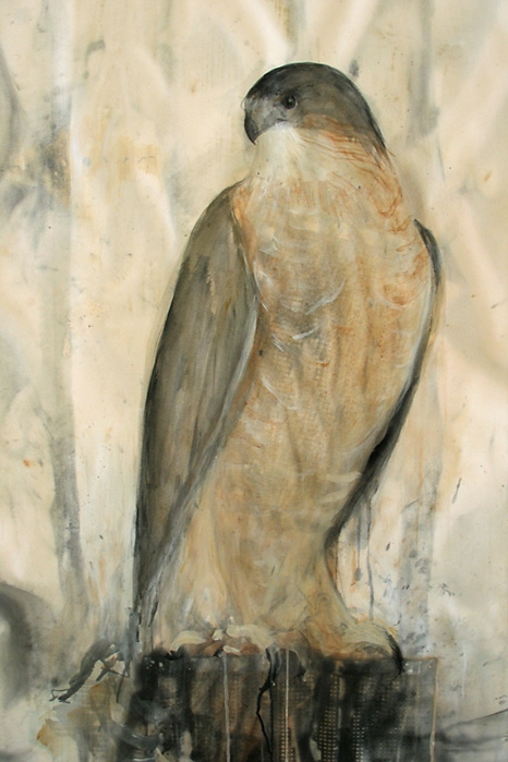 """Dusk (Cooper's Hawk),"" 2008 Coffee and sumi-e ink on folio paper 50"" x 38"""