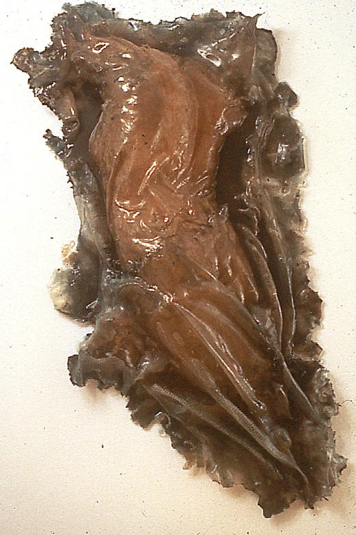"""""""Angel (for Mel),"""" 1995 Resin 42 x 28 x 6 inches"""
