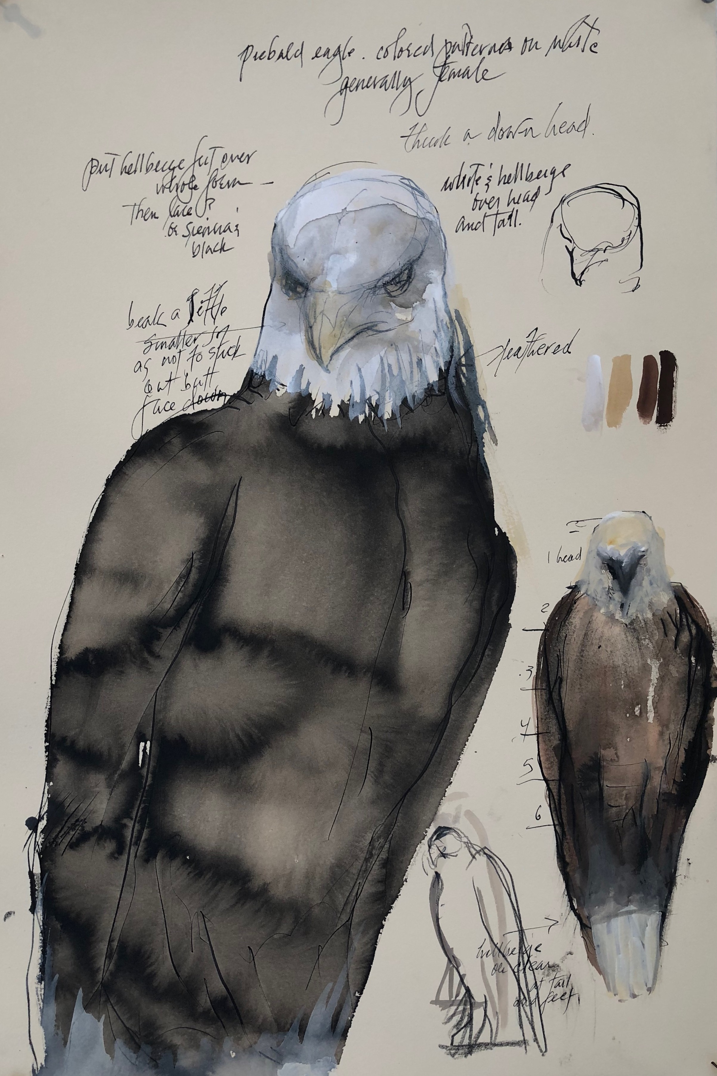 """Piebald Eagle,"" 2019 Sumi ink, gouache, coffee, and colored pencil on paper 22 x 15 inches"