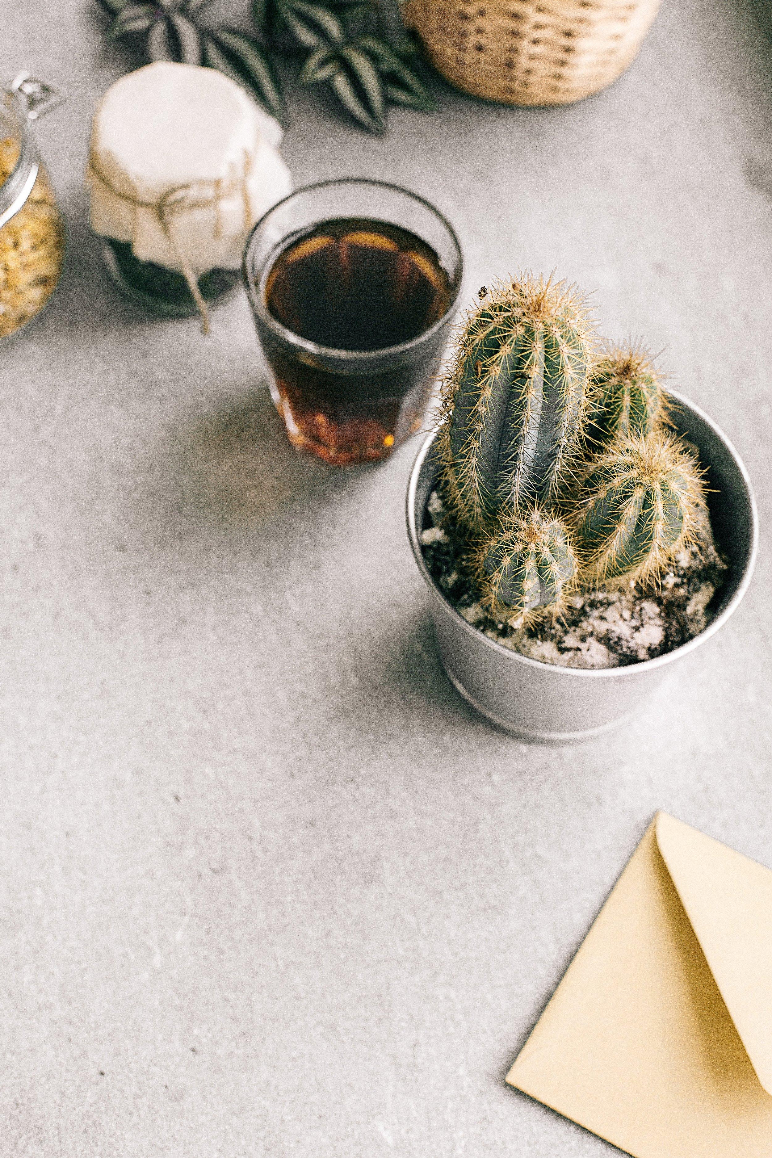 cactus-cactus-plant-coffee-1056720.jpg