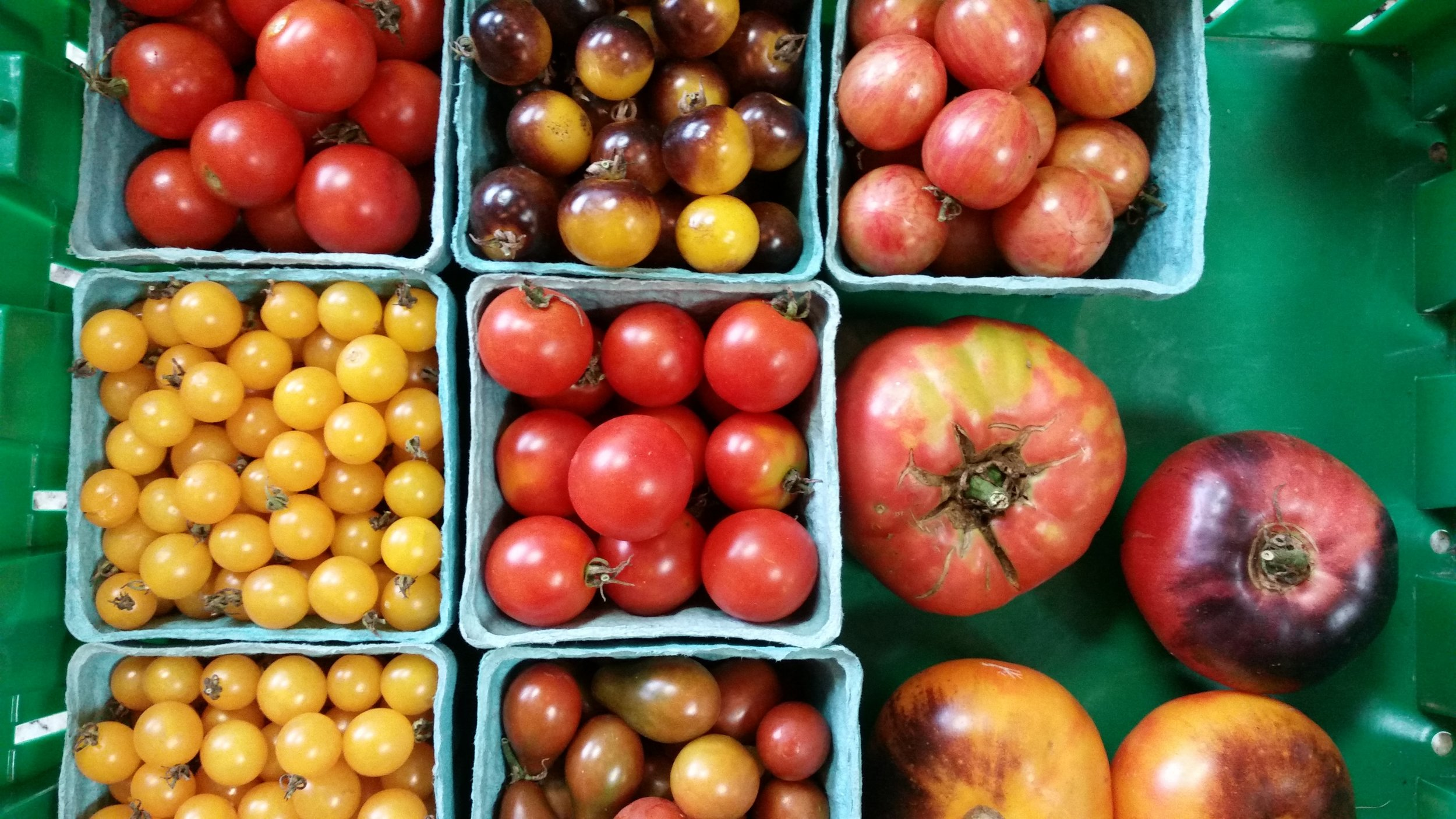 Indiana tomatoes are in a class all their own.