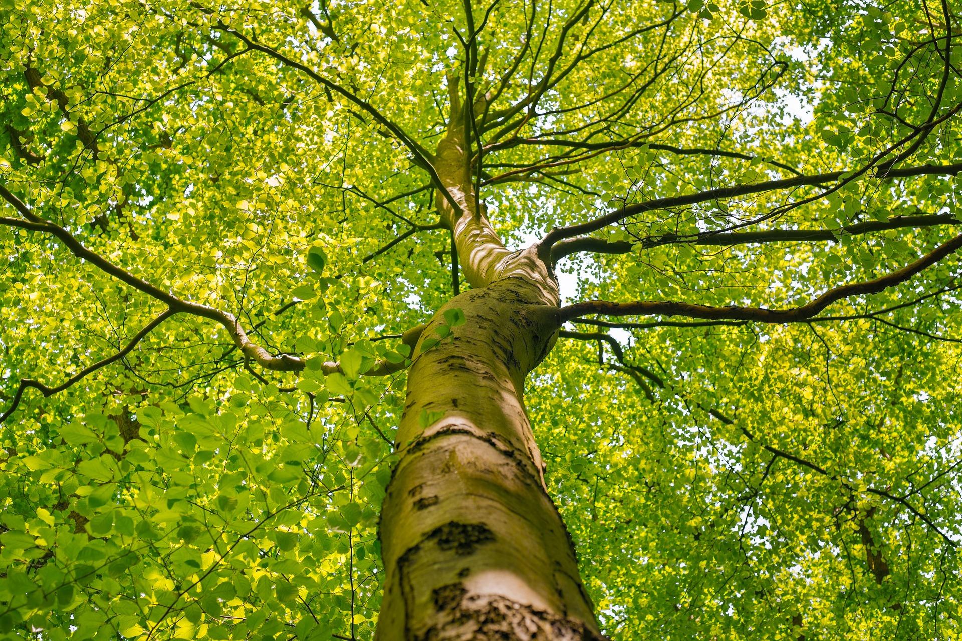 tree-crown-1394394_1920.jpg