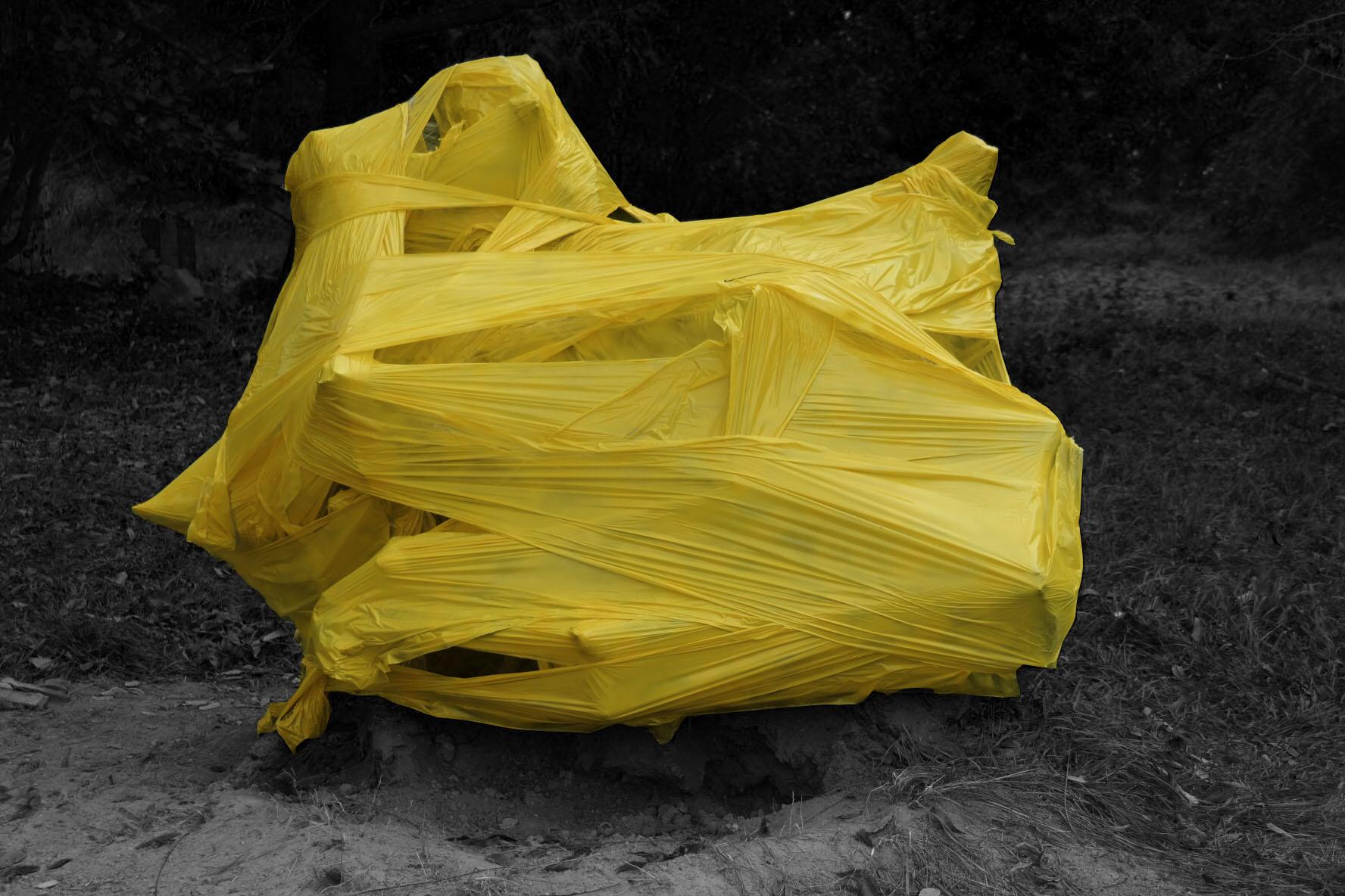Yellow Root II