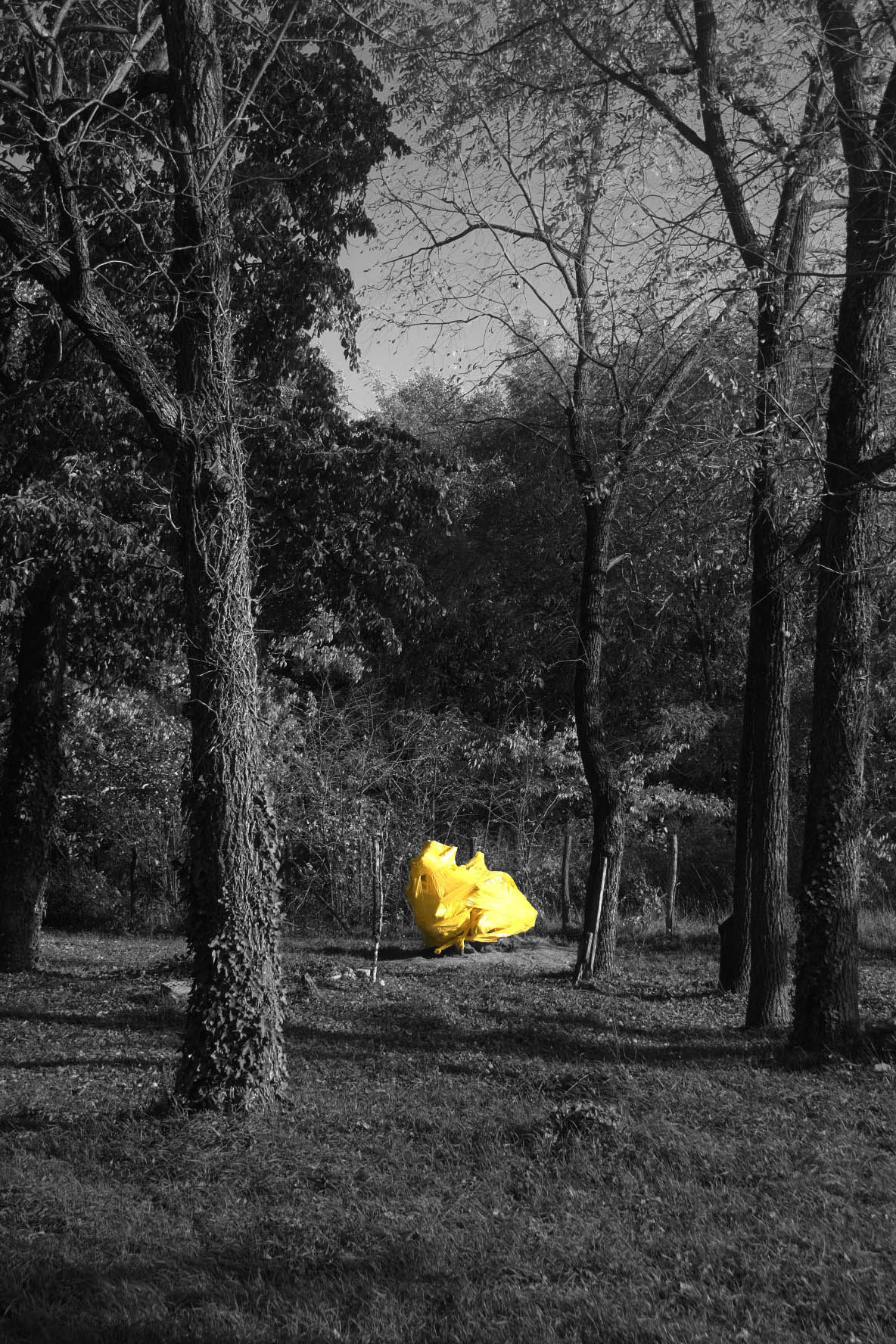 Yellow Root I