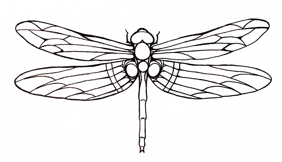 Best-Dragonfly-Tattoo-1.png