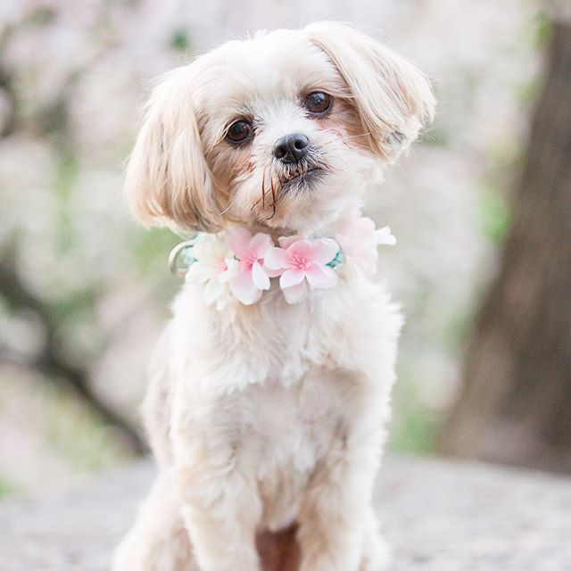 Coming this afternoon...a beautiful Manhattan #styledshoot featuring this adorable furball. 📷: @kristinastaalphotography #weddingblog #weddinginspiration #weddinginspo #dogsofinstagram #manhattan #wedding