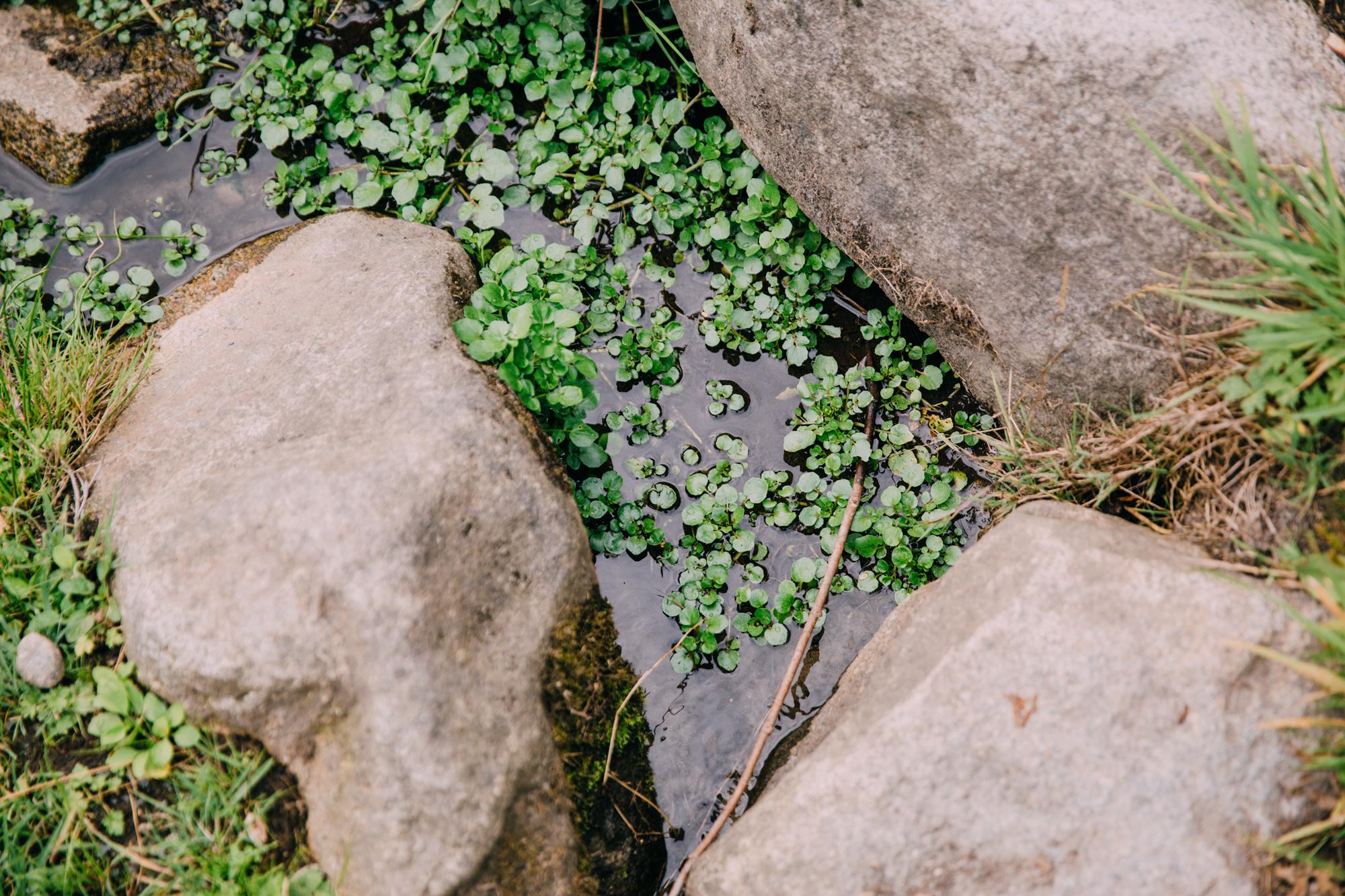 Sonia Primerano Photography Lifestyle Seattle Washington Park Arboretum