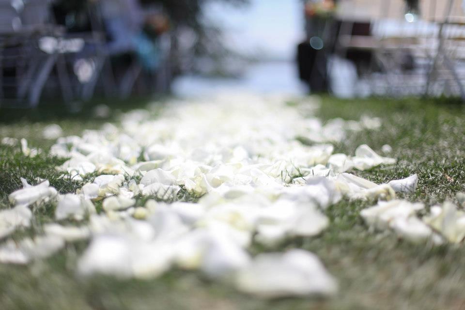 white rose petals as an aisle runner