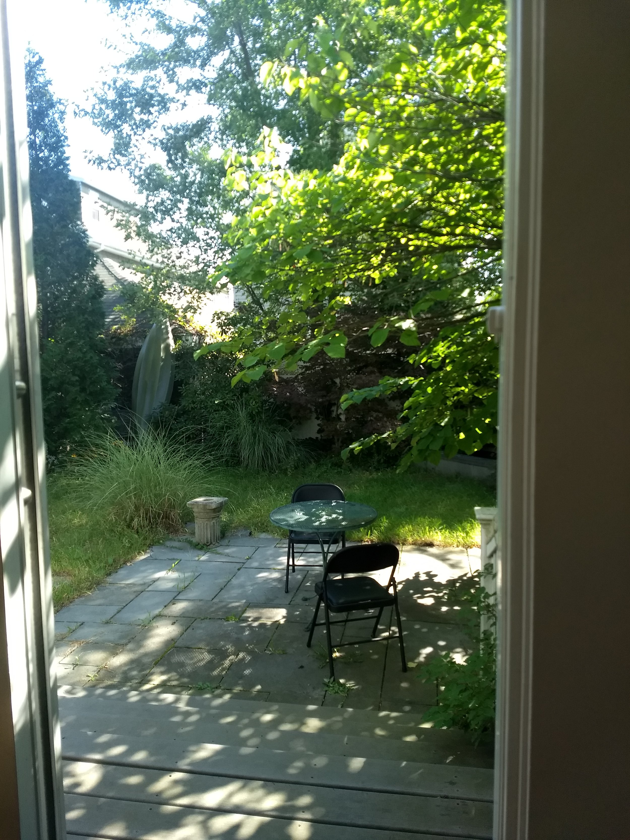 A bit bedraggled, but every writer needs a garden to take care of