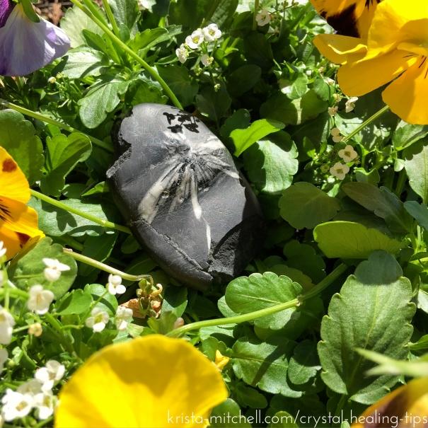 Chrysanthemum stone / krista-mitchell.com